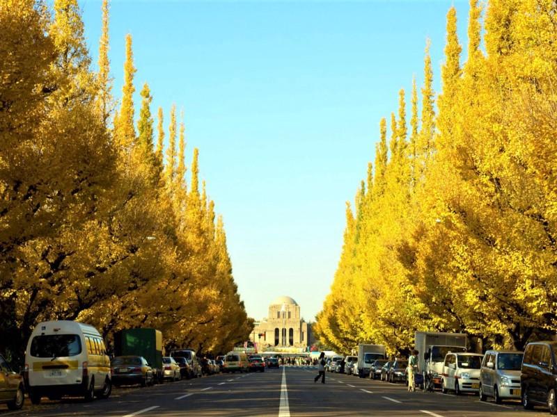 Gaimen-mae Ginko street