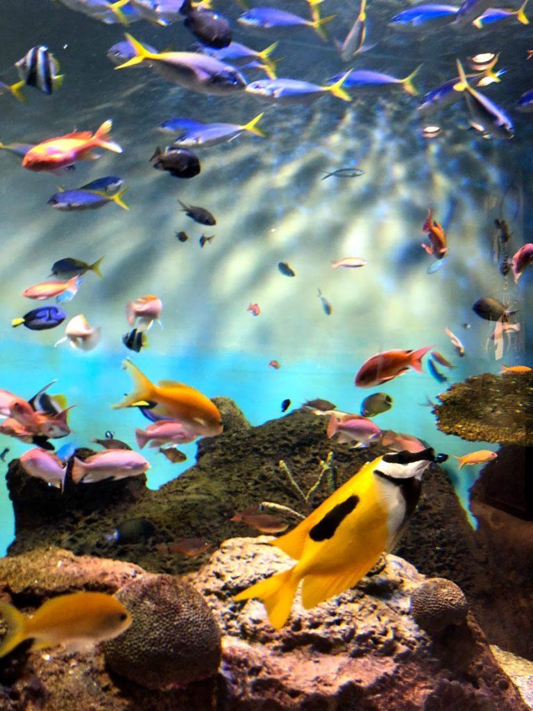 Aquarium in Tokyo